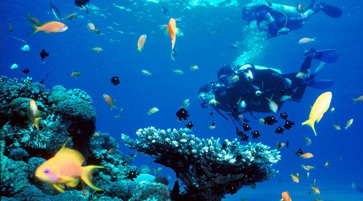 Duiken bij Bonaire
