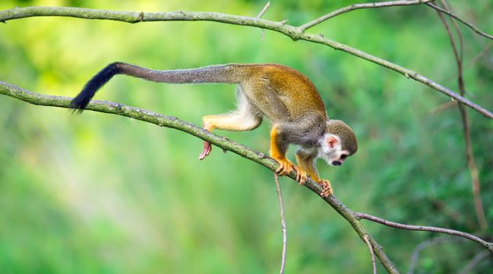 Dieren spotten in costa rica reisbureau - Hoe een boom te verlichten ...