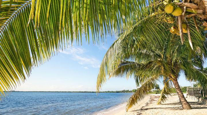 Palmbomen op het strand van Playa Larga met een turquoise blauwe zee