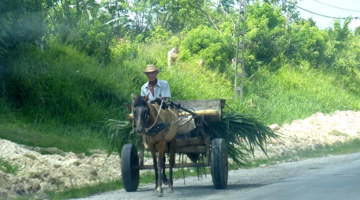 Paard en wagen op het Cubaanse platteland