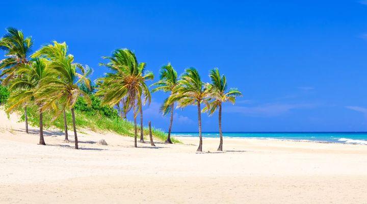Kokospalmen op het strand van Varadero
