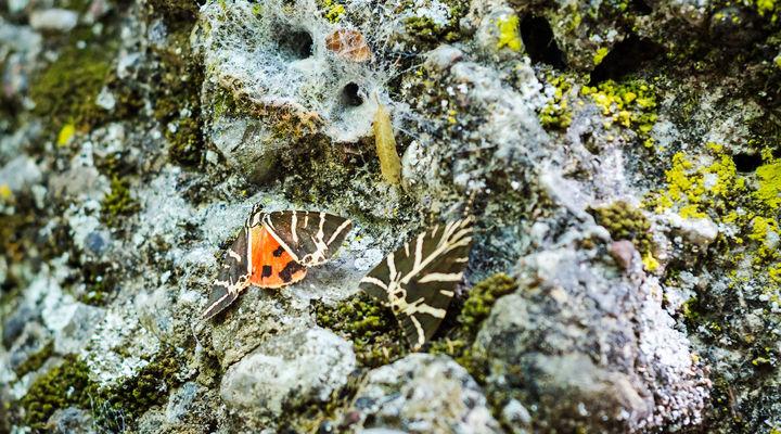 Vlindervallei Petaloúdes