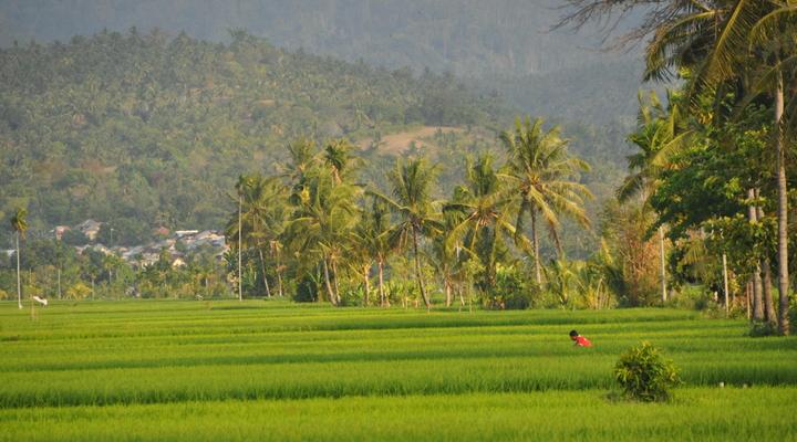 Het groene landschap van Lombok