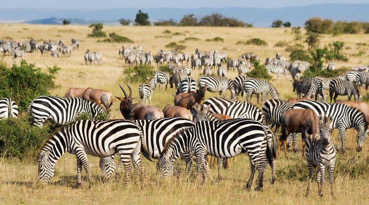 De Grote Trek in Masai Mara
