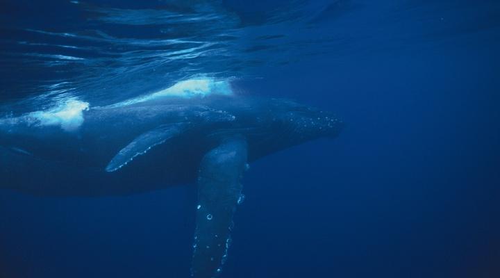Walvis in de baai