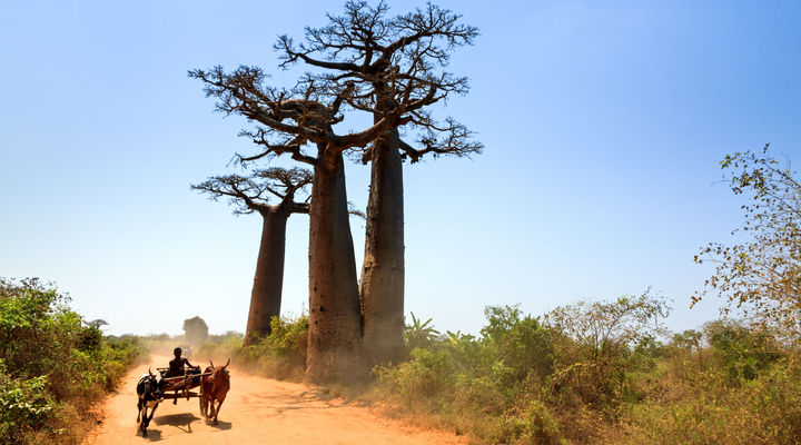Madagaskar, duurzame bestemming van Better Places