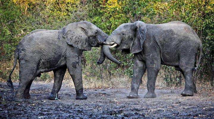 Wildlife spotten in Malawi