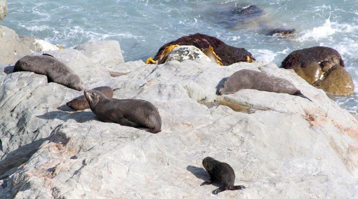 Zeehondjes op rotsen aan het water