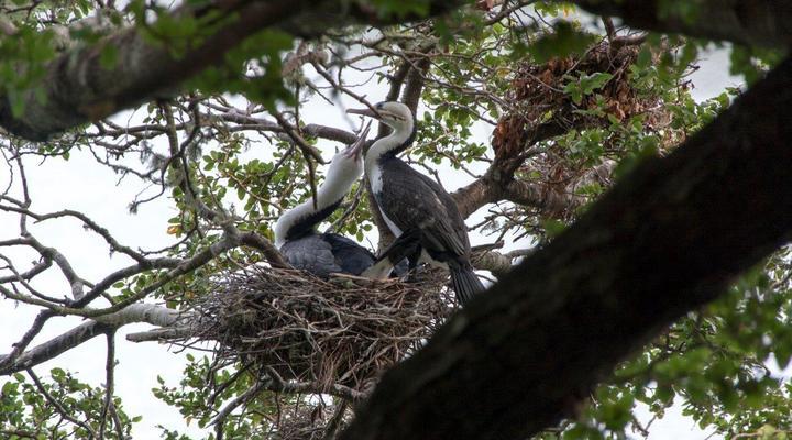 Een nest met twee vogels