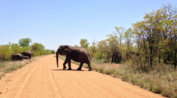 Kruger National Park, Zuid-Afrika