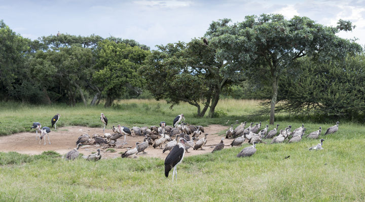 Moholoholo gamereserve in Zuid-Afrika