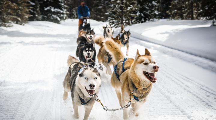 Op hondensledetocht in Zweden