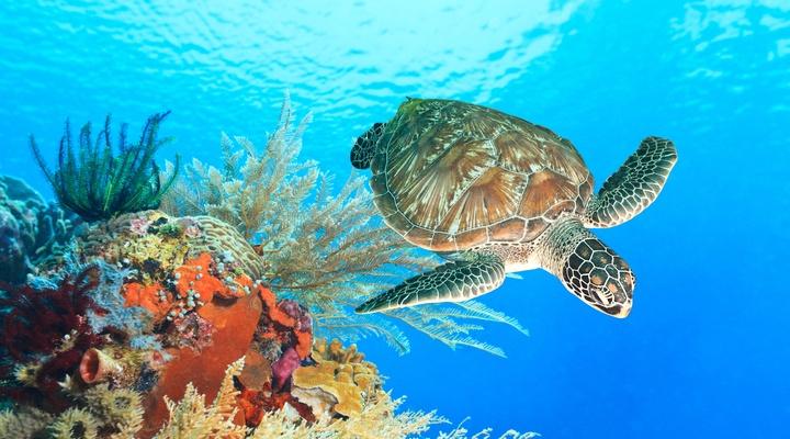 Schildpad bij koraalrif