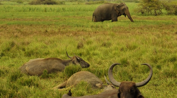 Safari in Yala
