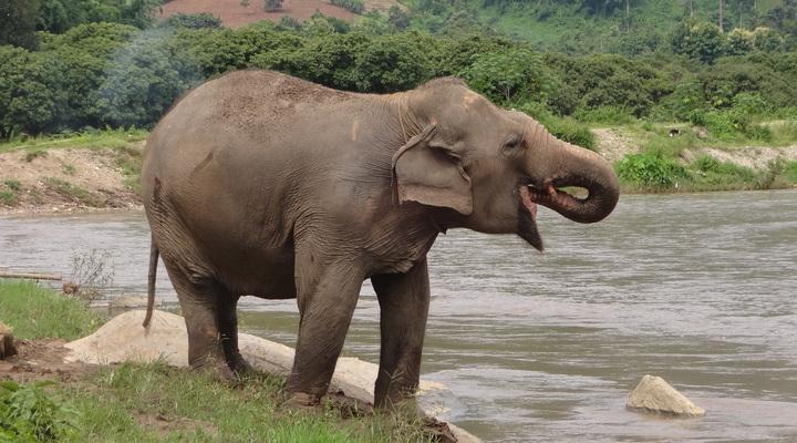 Olifant in het olifantenpark