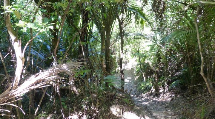 Het einde van de weg in de jungle
